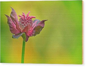 Pink Jester In Greene Wood Print by Sylvia J Zarco