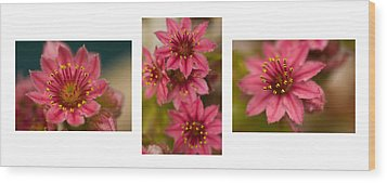 Wood Print featuring the photograph Pink Joy by Trevor Chriss