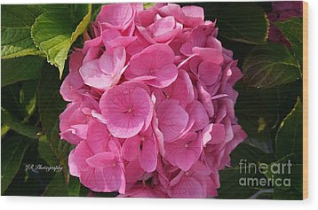 Wood Print featuring the photograph Blushing Rose by Jeannie Rhode