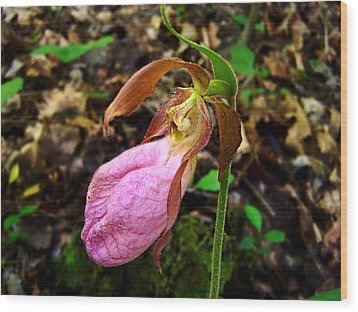 Wood Print featuring the photograph Pink Ladyslipper Orchid by William Tanneberger