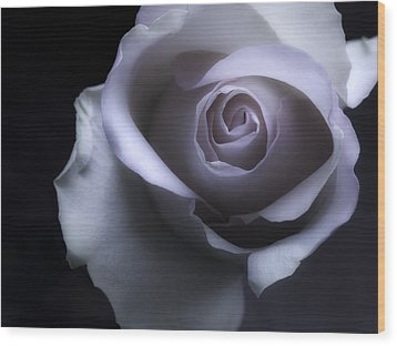 Black And White Rose Flower Macro Photography Wood Print