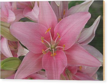Pink Lilies Wood Print by Cary Amos
