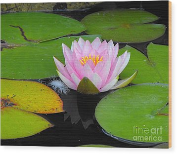 Pink Lilly Flower Wood Print