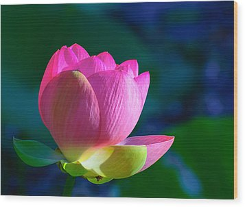 Wood Print featuring the photograph Pink Lily by John Johnson
