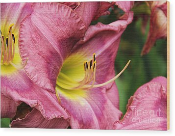 Pink Lily Wood Print by Rosemary Aubut