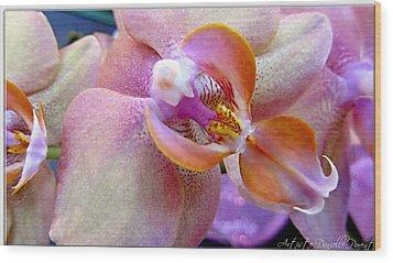Pink Limonaid Orchids Macro Wood Print by Danielle  Parent
