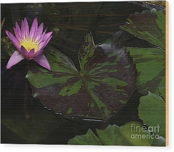 Pink Lotus Flower On Heart Shape Lily Pad Wood Print