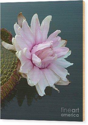 Pink Lotus In Water Wood Print by Mukta Gupta