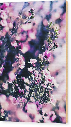 Pink Manuka Flowers Wood Print by motography aka Phil Clark