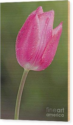 Pink On Green Wood Print by Nick  Boren