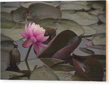 Pink On The Pond Wood Print