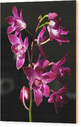 Pink Orchid Wood Print by Eva Csilla Horvath