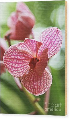 Pink Orchid I Wood Print by Pamela Gail Torres