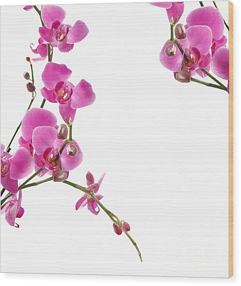 Pink Orchids Wood Print by Boon Mee