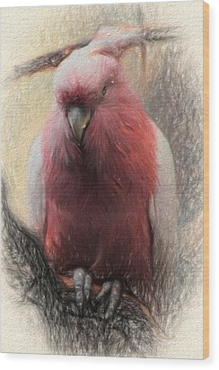 Pink Painted Parrot Wood Print by Terry Cork