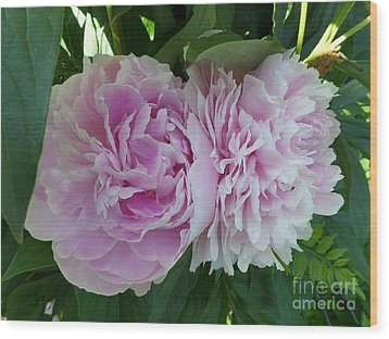 Pink Peonies 2 Wood Print by HEVi FineArt
