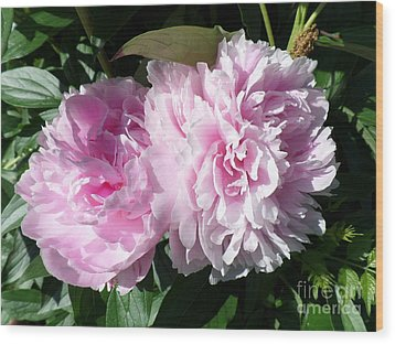 Pink Peonies 3 Wood Print by HEVi FineArt