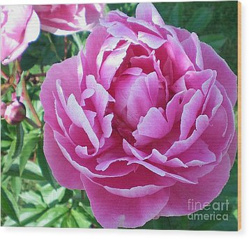 Wood Print featuring the photograph Pink Peony by Barbara Griffin