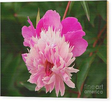 Pink Peony Wood Print by Mary Carol Story