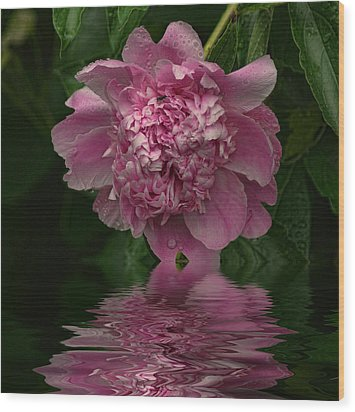 Pink Peony Reflection Wood Print