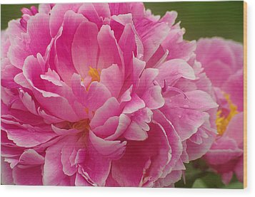 Wood Print featuring the photograph Pink Peony by Suzanne Powers