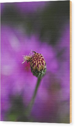 Wood Print featuring the photograph Pink Perfect by Susan D Moody