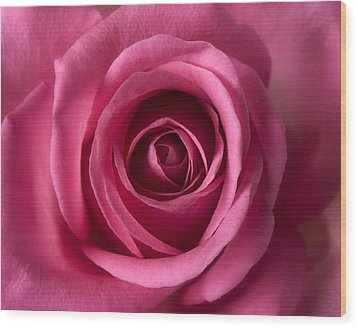 Pink Perfection - Roses Flowers Macro Fine Art Photography Wood Print