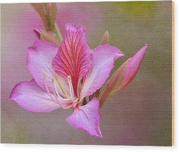 Pink Persuasion Wood Print by Fraida Gutovich