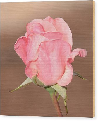 Pink Petals Wood Print by Julie Cameron
