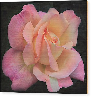 Wood Print featuring the photograph Pink Petals by Kim Andelkovic