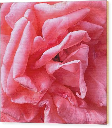 Wood Print featuring the photograph Pink Petals Up Close Rose Art Photo by Marianne Dow