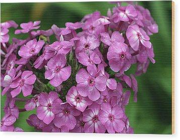 Pink Petals With Green Bokeh Wood Print by Gene Walls