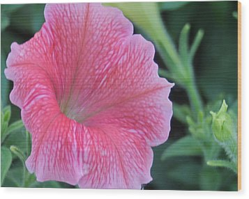 Pink Petunia Wood Print by Victoria Sheldon