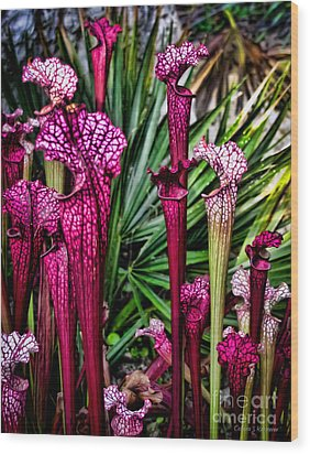 Pink Pitcher Plants Wood Print by Colleen Kammerer