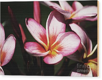 Wood Print featuring the photograph Pink Plumeria by Angela DeFrias