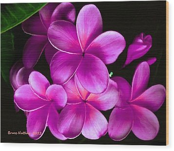 Pink Plumeria Wood Print by Bruce Nutting