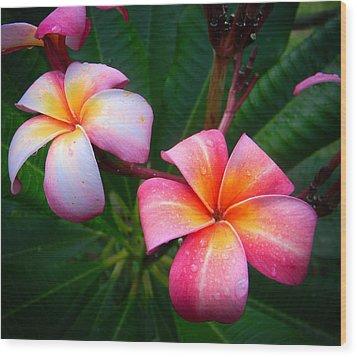Pink Plumeria Wood Print by Christy Usilton