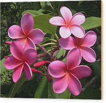 Pink Plumeria Wood Print by Claude McCoy