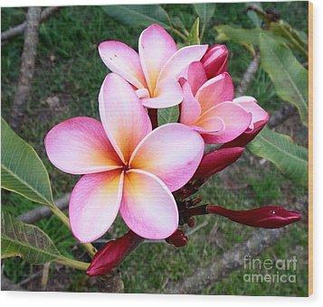 Pink Plumeria Wood Print by Mindy Sue Werth