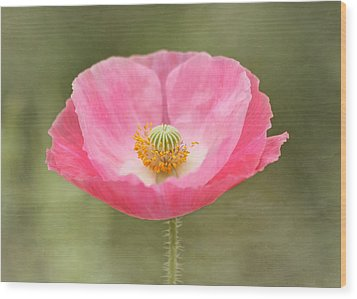 Pink Poppy Flower Wood Print by Kim Hojnacki