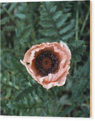 Flesh-tone Poppy Wood Print