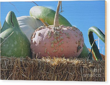 Pink Pumpkin And Friends Wood Print