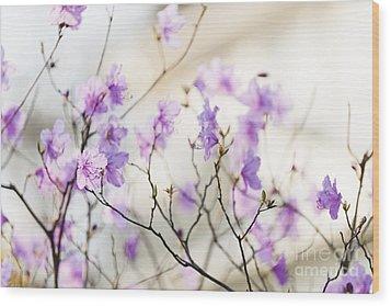 Pink Rhododendron In Spring Wood Print by Elena Elisseeva