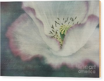 Pink Rimmed Beauty Wood Print by Priska Wettstein
