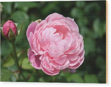 Wood Print featuring the photograph Pink Rose 2 by Ellen Tully
