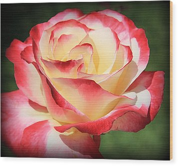 Wood Print featuring the photograph Pink Rose by Athala Carole Bruckner