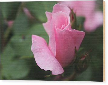 Pink Rose Wood Print by Carolyn Ricks