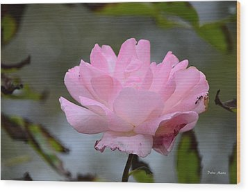 Wood Print featuring the photograph The Last Rose by Debra Martz