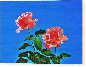 Pink Rose Wood Print by Ed Roberts