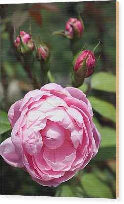 Wood Print featuring the photograph Pink Rose by Ellen Tully